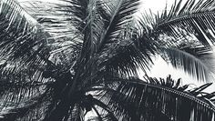 🌚🌴#photography #explorenature #wilphotography #exploregreen #travelgram #travelphoto #travel #instaphoto #blackandwhite #palmtree #livelovelaugh #ph #loveit #artofnature #wondersofnatureartofnature,wondersofnature,explorenature,exploregreen,loveit,ph,blackandwhite,wilphotography,travel,livelovelaugh,photography,palmtree,instaphoto,travelphoto,travelgram