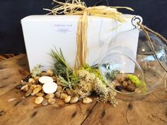 "We have everything you need to create this adorable air plant terrarium kit! Purchase for yourself or as a gift.  The kit includes a variety of preserved moss, 2 small air plants, 2 sand dollars, mixed river stone and a 6"" hanging glass globe. All gift wrapped and ready for delivery!"
