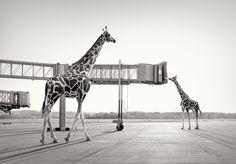 Lost animals...
