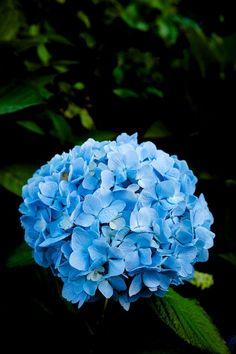 Sininen on minun suosikki värejä