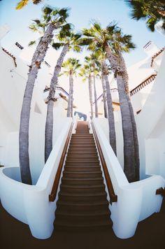 """sassafranski: """"palm tree heaven """""""