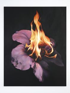 got any more harsh digs? Burning Flowers, Zine, Graphic Design, Drawings, Illustration, Prints, Photography, Painting, Eternal Flame