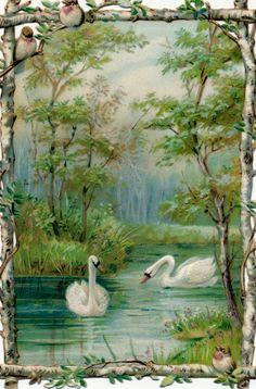 Dreamy swans