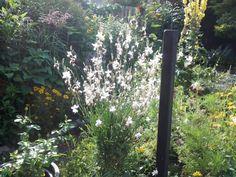 Zomer 2015 tuin