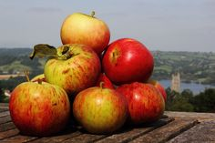 apples2 | by TheCommunityFarm