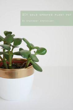 DIY gold sprayed plant pot tutorial | Apartment Apothecary