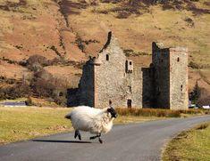 Rush hour traffic at Lochranza Castle on the Isle of Arran, Scotland.