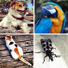 Desafio #planeta_suafoto pelo Dia dos Animais ganha categorias e prêmios