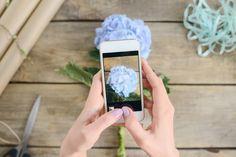Microsoft cria aplicativo que identifica flores através de foto