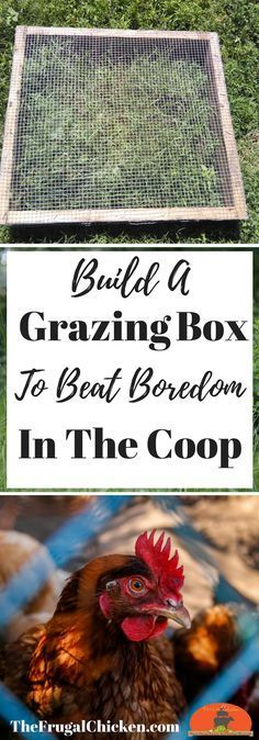 With these free plans, you can build your own grazing box in just a few minutes. Your chickens will love it (and they'll be healthier!)