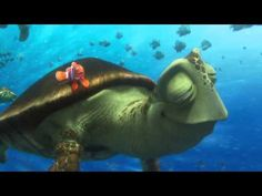 Screencap Gallery for Finding Dory Bluray, Disney, Pixar). Dory is a wide-eyed, blue tang fish who suffers from memory loss every 10 seconds or so. Disney Pixar, Film Disney, Disney Movies, New Trailers, Movie Trailers, Star Wars Video Games, Trailer Oficial, Sis Loves, Movie Teaser