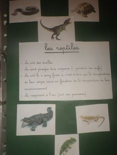 Nous avons tout d'abord vu les caractéristiques des reptiles et avons cité les principaux, fait un tri de figurines reptiles / pas reptiles, avant de consigner cela à l'écrit :