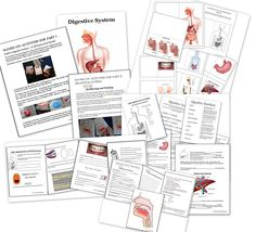 Human Body Activities – including Digestive System - Homeschool Den