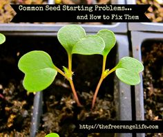4 fixes for common seed starting problems.