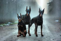 these dogs... the photography- awesome!