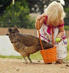 Foto linda. Que menina amável dando de comer a uma galinha.