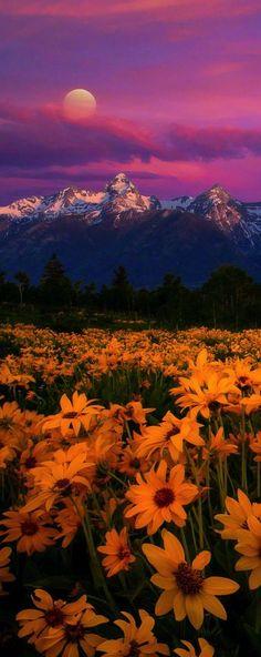 Grand Tetons National Park, Wyoming, USA (by Nitin Kansal)
