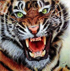 Angry Tiger - Ballpoint Pen drawing by Samuel Silva / Portugal - London, UK Amazing Drawings, Realistic Drawings, Detailed Drawings, Samuel Silva, Art Tigre, Angry Tiger, Ballpoint Pen Drawing, Tiger Art, Trash Polka
