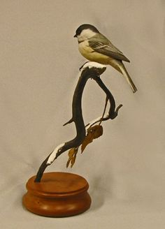 Black-Capped Chickadee-wood carving Gail Stanek