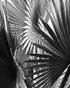 palm leaves black white palm tree nature by ImagesByJune on Etsy, $16.00