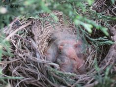 Baby birdlings living next to our porch