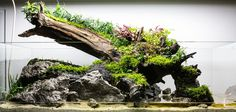 """fuck-yeah-aquascaping: """"Read and learn how to create a wabi-scape: part 1 – hardscape and tech part 2 – planting by Roberto Bielli """" #テラリウム ほぉ!これは見事! 底砂にK砂を! Diy Aquarium, Planted Aquarium, Nano Aquarium, Nature Aquarium, Aquarium Design, Aquarium Fish Tank, Aquarium Ideas, Aquarium Landscape, Indoor Water Garden"""