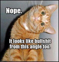 36 Funny Cat Memes That Will Make You Laugh Out Loud – Funny Cat Quotes 36 lustige Katzen-Meme, die Sie laut lachen lassen – … Funny Animal Memes, Cute Funny Animals, Funny Cute, Cute Cats, Funny Memes, Funny Laugh, Funny Cat Quotes, Funniest Animals, Funny Cats