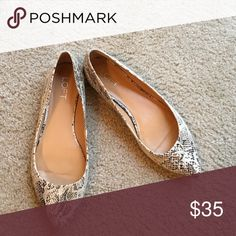 Shoes Snake skin pointy toe shoes LOFT Shoes Flats & Loafers