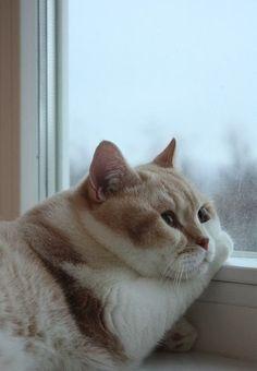 Chubby cat cheeks.