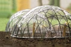 Creating your own Garden Cloche to protect your seeds, seedlings, plants from those late spring frosts Organic Gardening, Gardening Tips, Container Gardening, Garden Crafts, Garden Projects, Diy Projects, Garden Cloche, Mini Greenhouse, Greenhouse Ideas