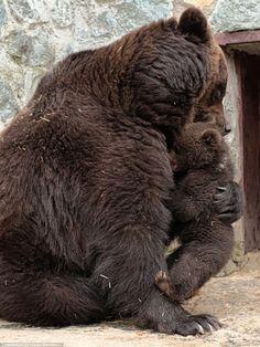 brown bear hug