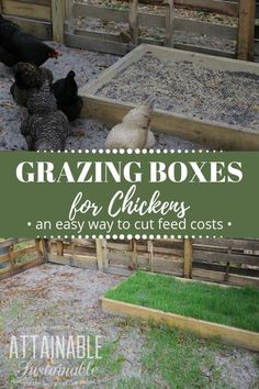 DIY grazing boxes make for happy grass fed chickens. They're a great way to save on the cost of raising backyard chickens (and other poultry), too! Grass Fed Chicken, Chicken Garden, Backyard Chicken Coops, Chicken Coop Plans, Chicken Feed, Building A Chicken Coop, Chicken Treats, Raising Backyard Chickens, Keeping Chickens