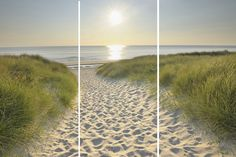 Beach Walk Printed Canvas