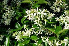 Photo: mirantaslittlegarden.blogspot.gr Herbs, Nature, Flowers, Plants, Gardening, Decoration, Sweet, Decor, Candy