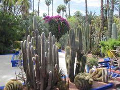 Cactus Plants, Garden, Garten, Cacti, Lawn And Garden, Cactus, Gardens, Gardening, Outdoor