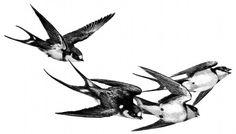 Flock of Vintage Birds Image