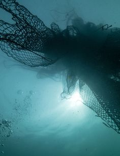 Let's protect ocean life by giving discarded fishing nets a new one. Stay tuned...