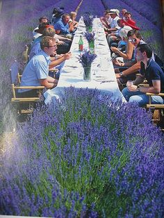 dining in the lavender field