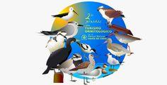 turismo ornitológico en Cádiz