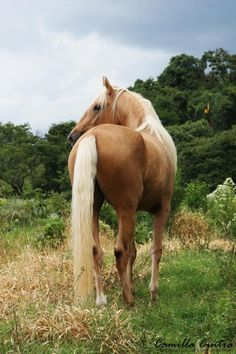 I've always wanted a tan horse with a blonde mane
