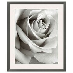 Art.com Rose Framed Wall Art, Black