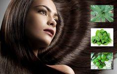 Obat Penumbuh Rambut Alami Tradisional