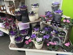 Superb houseplant displays at Ferndale Garden Centre