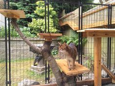 Awesome DIYed Outdoor Cat Enclosure