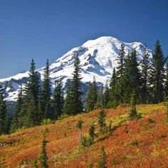 Hikes in Mount Rainier National Park. #hike #mountains #trails