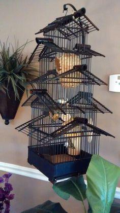 My bamboo bird cage