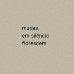 Mudas, em silêncio florescem.