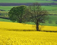 Fife, Scotland by Victoria Cormie, Flickr Country Life, Country Roads, Orkney Islands, Two Trees, Irish Sea, Outer Hebrides, Scotland Uk, North Sea, Fantastic Art