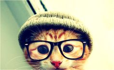 If I had a kitten-- it would be a dirty dirty hipster kitten that Dr. Kirby would make fun of on his Twitter.