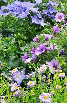 Botanisk Lykke: Hage